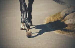 Top 4 Health Benefits of CBD for Horses